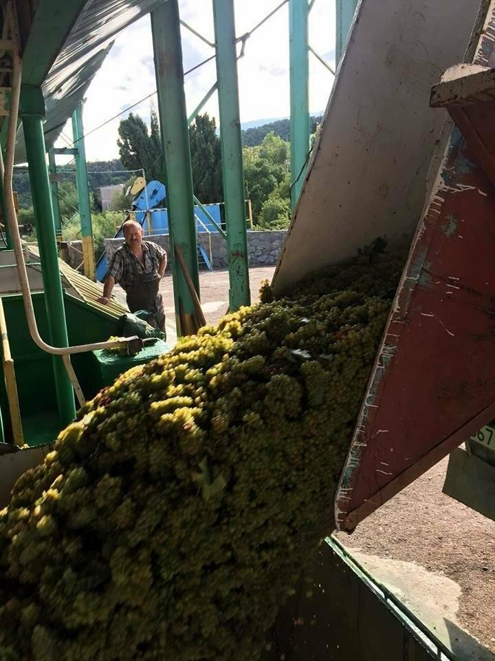 «Массандра» открыла сезон виноделия, фото-1