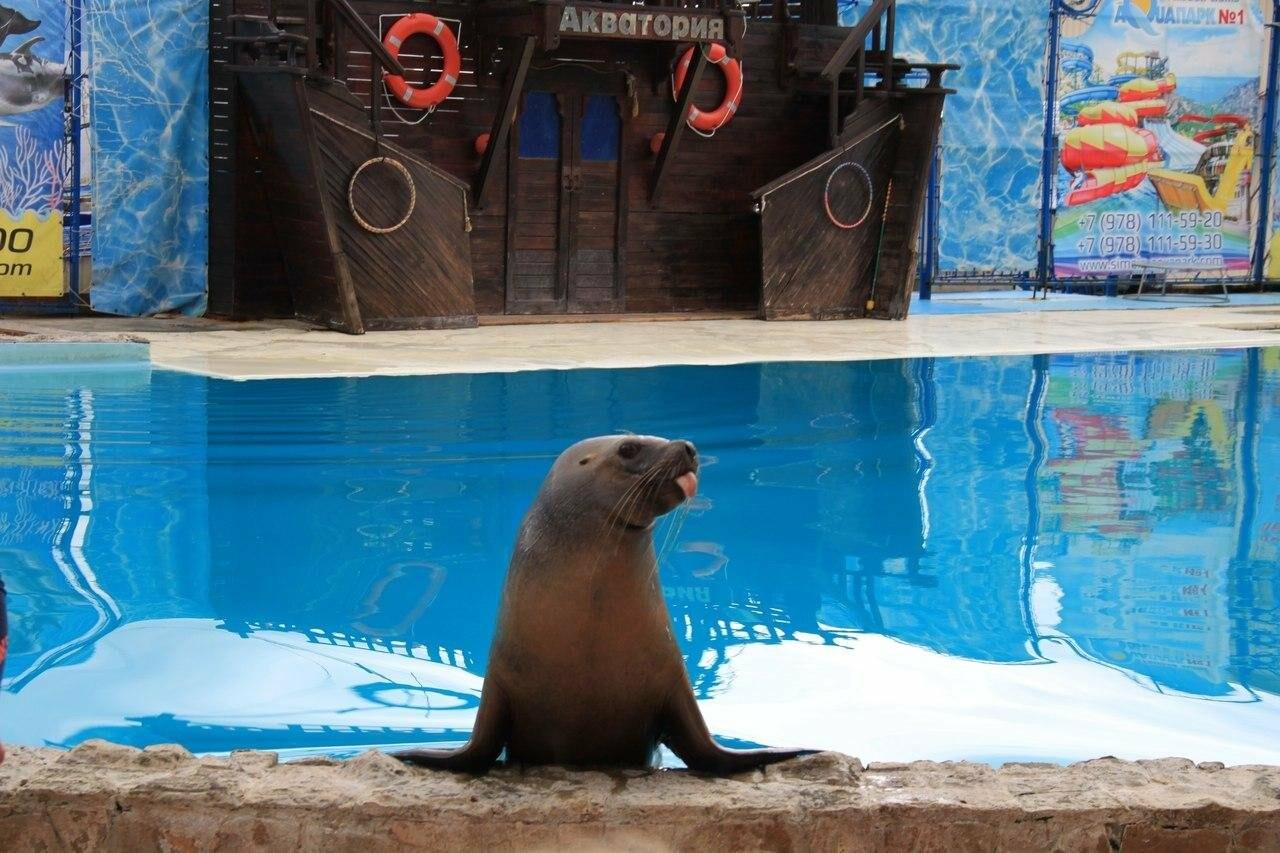 Ялтинский театр морских животных «Акватория» открыл зимний сезон , фото-1