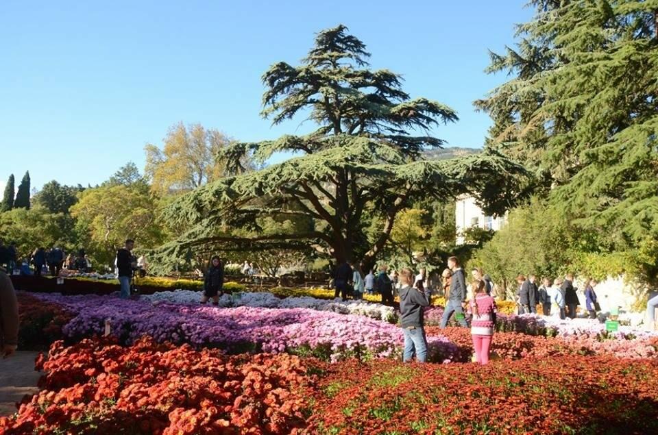 В последний день октября в НБС откроется парк «Монтедор», фото-5