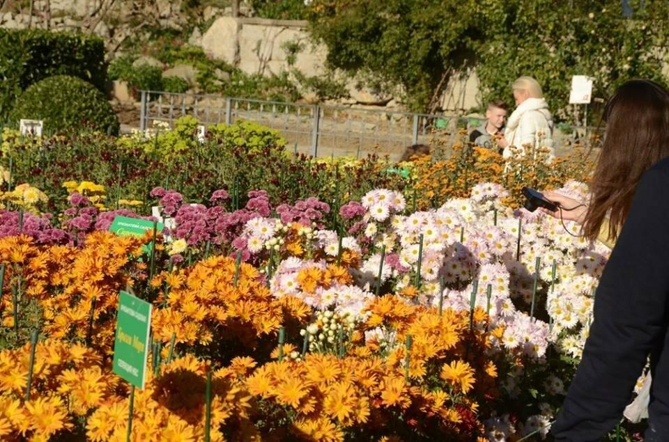 В последний день октября в НБС откроется парк «Монтедор», фото-4
