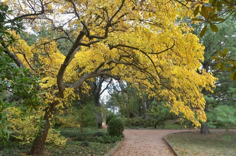 В последний день октября в НБС откроется парк «Монтедор», фото-2