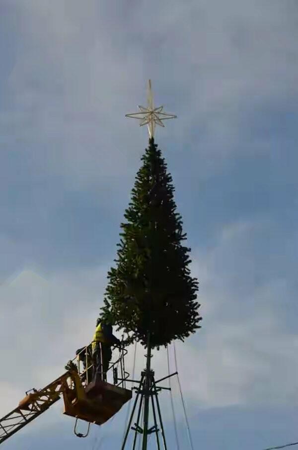 В Ялте началась установка городской елки , фото-2