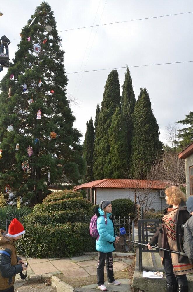 В Никитском саду 11-метровый секвойядендрон украсили игрушками ручной работы, фото-4