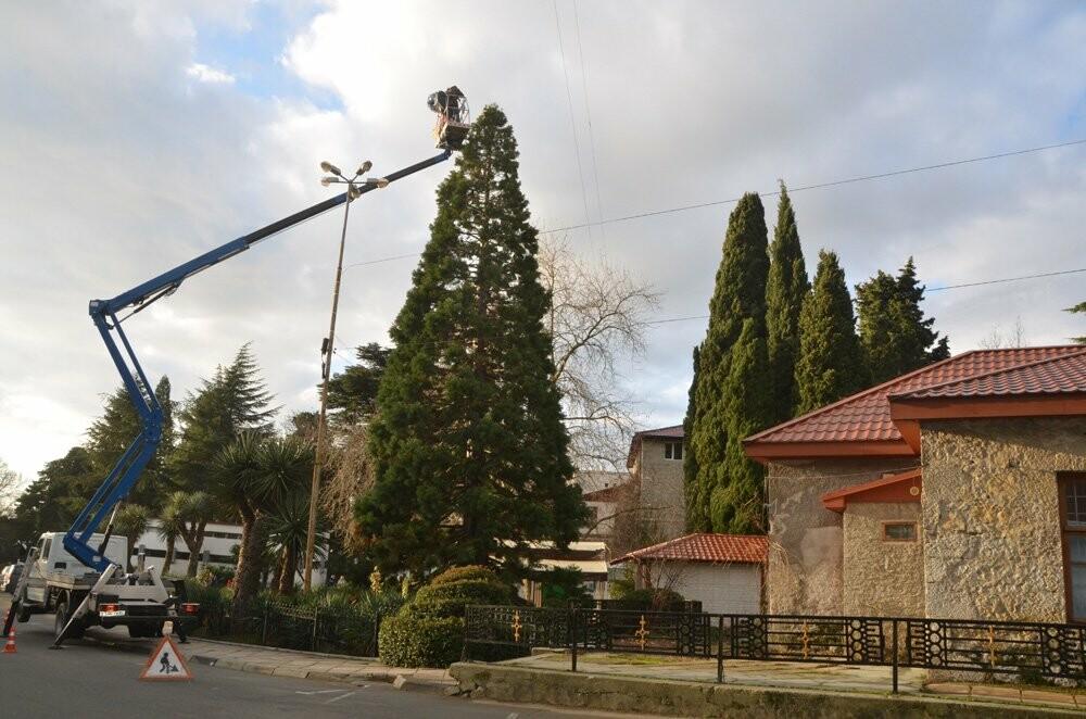 В Никитском саду 11-метровый секвойядендрон украсили игрушками ручной работы, фото-2