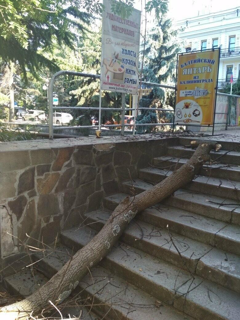 Фотофакт: в Ялте сухое дерево чуть не привело к трагедии , фото-1