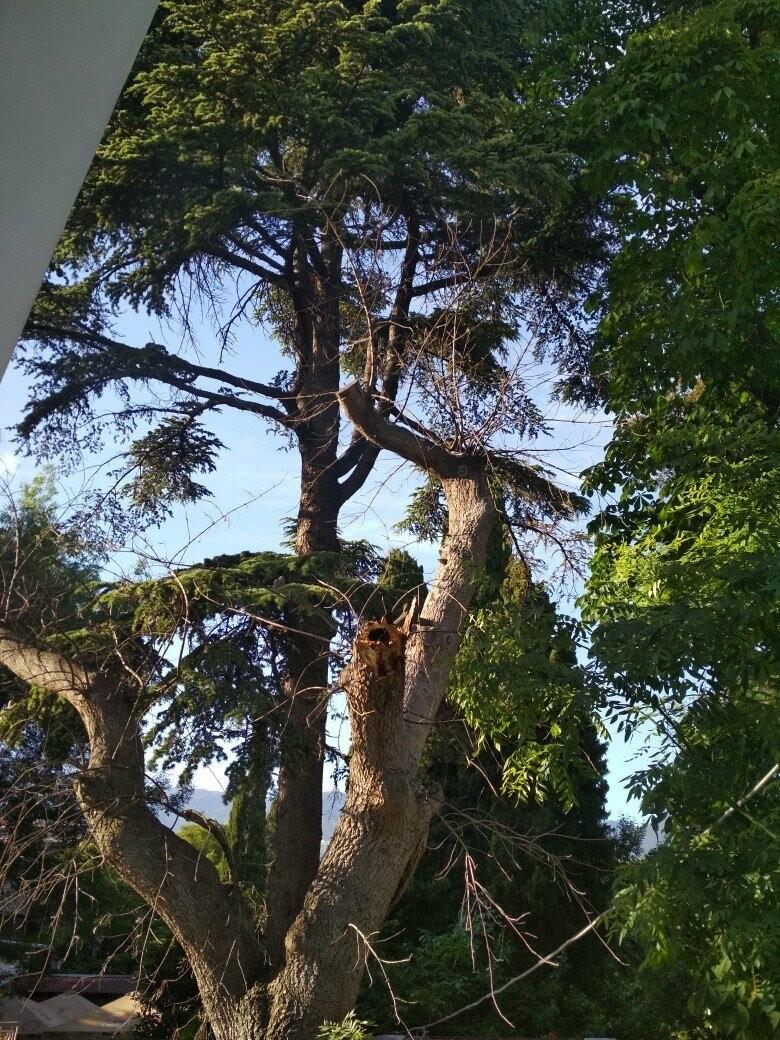 Фотофакт: в Ялте сухое дерево чуть не привело к трагедии , фото-3