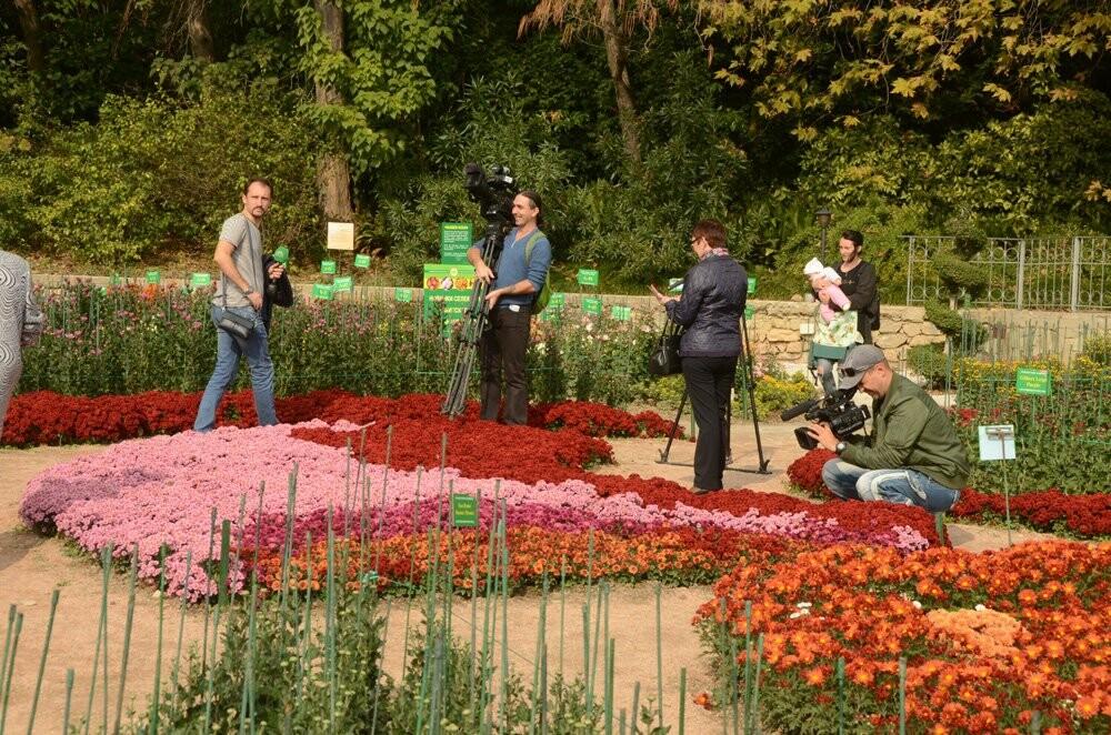 В Никитском саду открылась 65-я выставка хризантем, фото-4