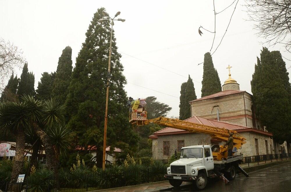Главный секвойядендрон Никитского сада к Новому году готов, фото-1