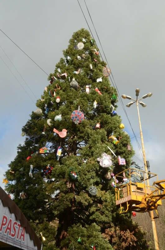 Главный секвойядендрон Никитского сада к Новому году готов, фото-4