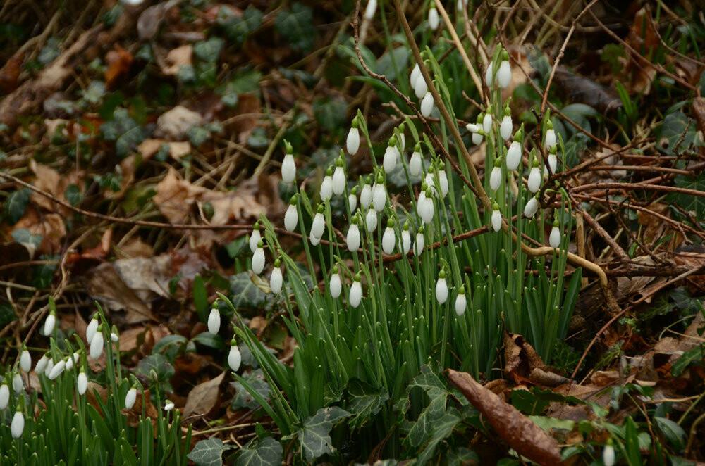 Фотофакт: в Никитский сад пришла весна!, фото-1
