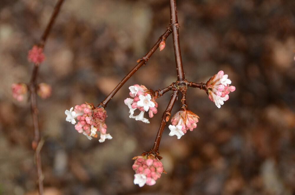 Фотофакт: в Никитский сад пришла весна!, фото-2