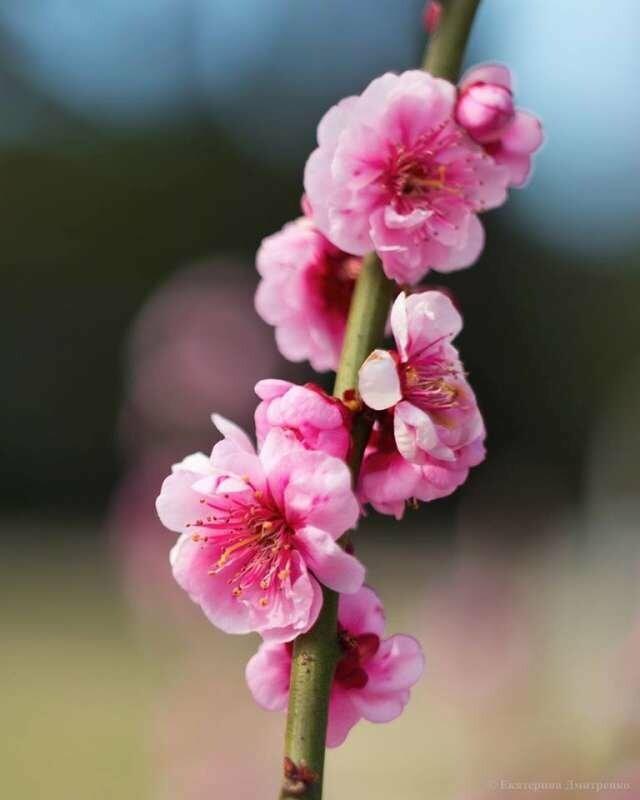Фотофакт: Проклюнулись первые участники 12-го Парада тюльпанов в Никитском саду, фото-2