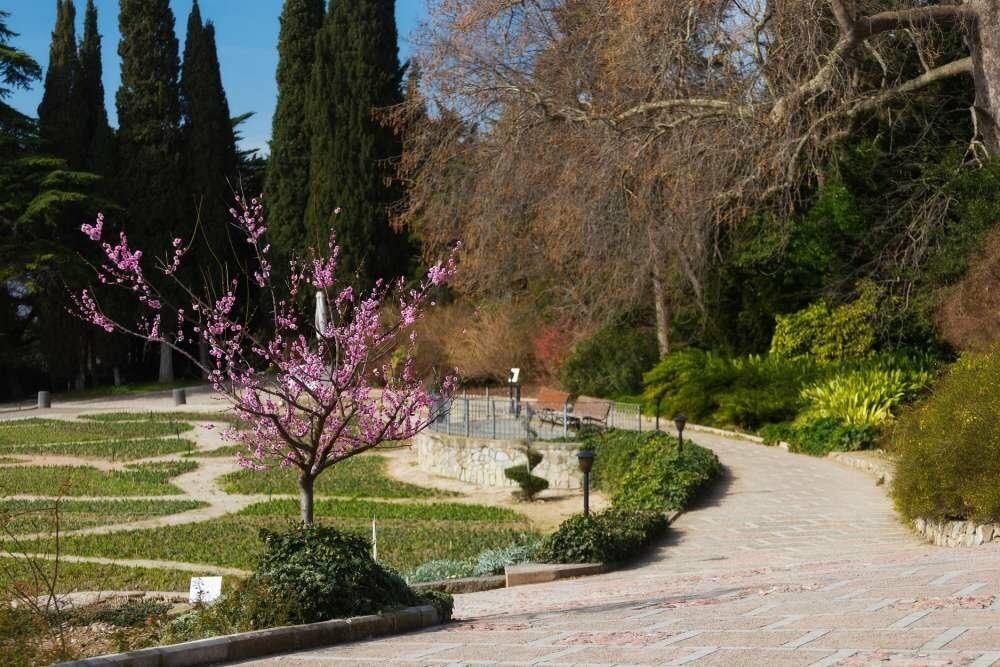 Фотофакт: Проклюнулись первые участники 12-го Парада тюльпанов в Никитском саду, фото-4