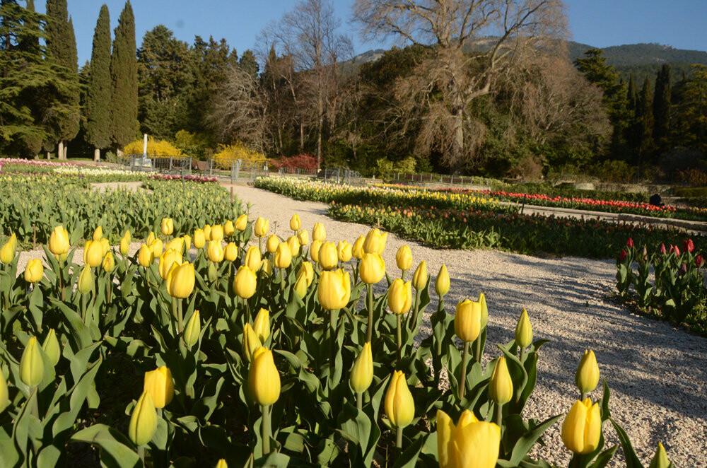 """На Параде тюльпанов в Никитском саду - """"Триумф новинок"""", фото-4"""