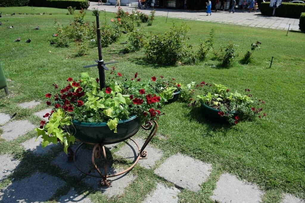 В Ялте приступили к установке элементов вертикального озеленения на площади Советской, фото-2
