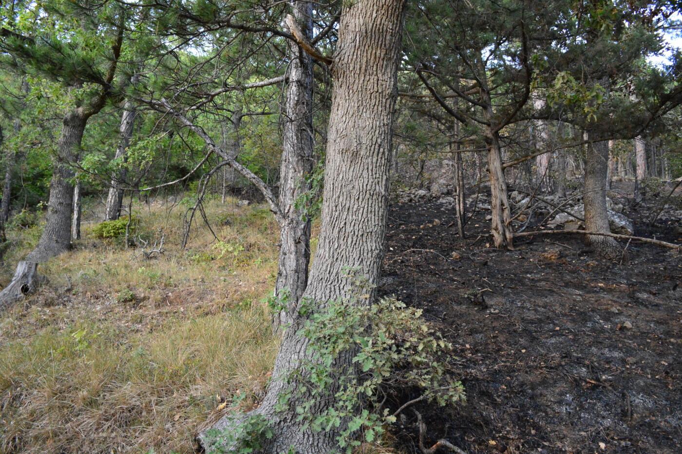 Фотофакт: результат пожара в районе  Солнечной тропы, фото-1