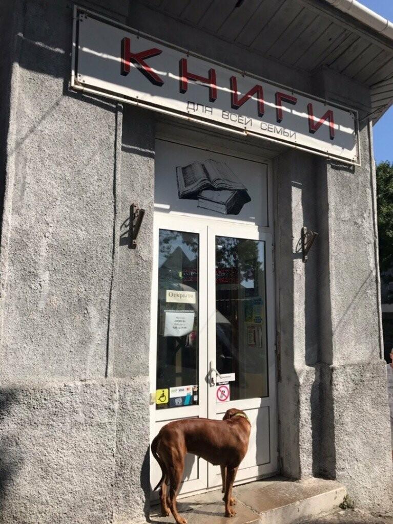 В Алупке закрывают единственный книжный магазин, - жители, фото-1