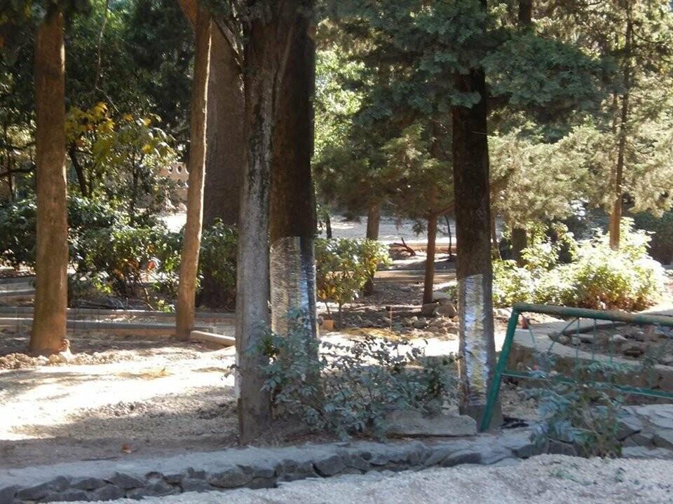Фотофакт: в Ялте деревья обертывают пищевой пленкой, фото-1