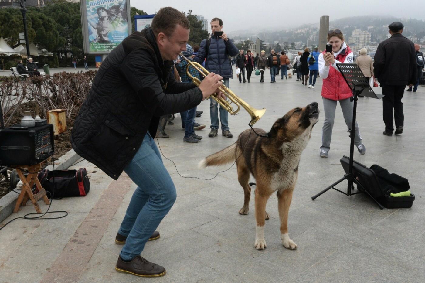 Любимого ялтинцами поющего пса Мухтара с набережной забрали отловщики, фото-1