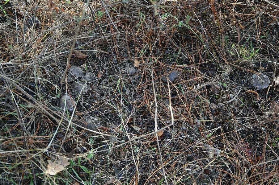 Фотофакт: ялтинцы в январе собирают грибы , фото-3