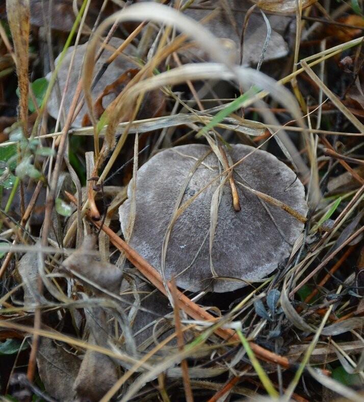 Фотофакт: ялтинцы в январе собирают грибы , фото-1