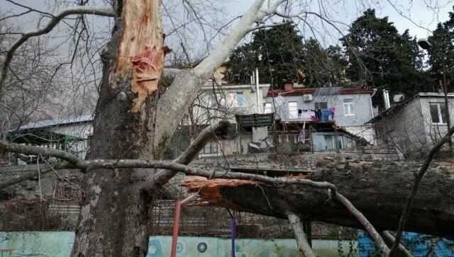 Резкое ухудшение погоды в Ялте: ветер повалил деревья и новогодние конструкции на Набережной, фото-2