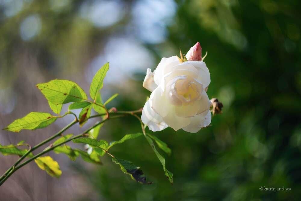 В День влюбленных вход в Никитский сад для Валентинов, Валентин и молодоженов - свободный!, фото-3