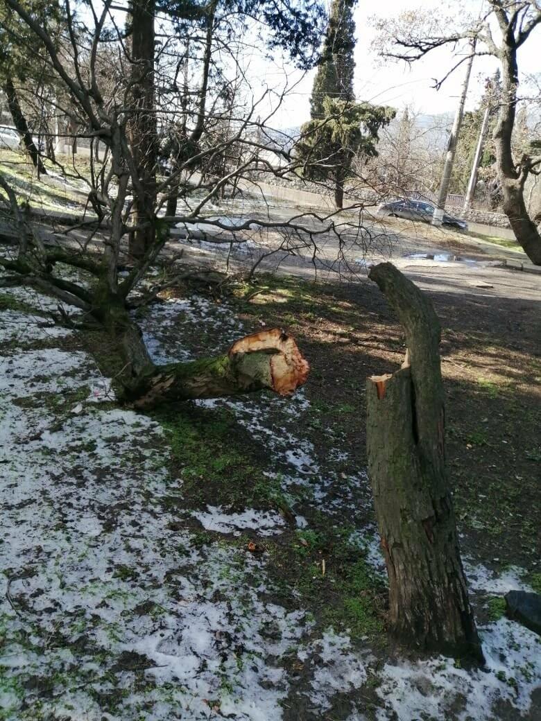 Ялта устраняет последствия урагана: повалены деревья, оборваны ЛЭП, фото-1