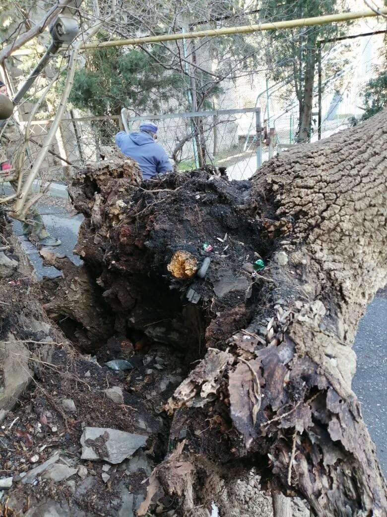 Ялта устраняет последствия урагана: повалены деревья, оборваны ЛЭП, фото-2