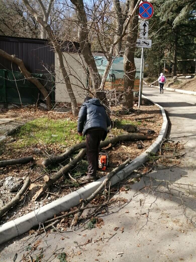 Ялта устраняет последствия урагана: повалены деревья, оборваны ЛЭП, фото-3