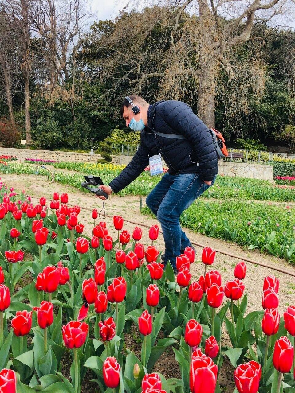 В Никитском ботаническом саду стартовал виртуальный Парад тюльпанов, фото-2