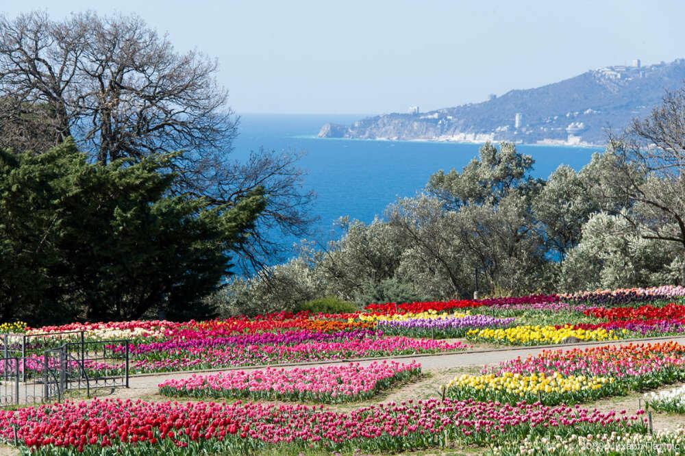«Парад тюльпанов 2020» в Никитском саду подвел итоги, фото-2