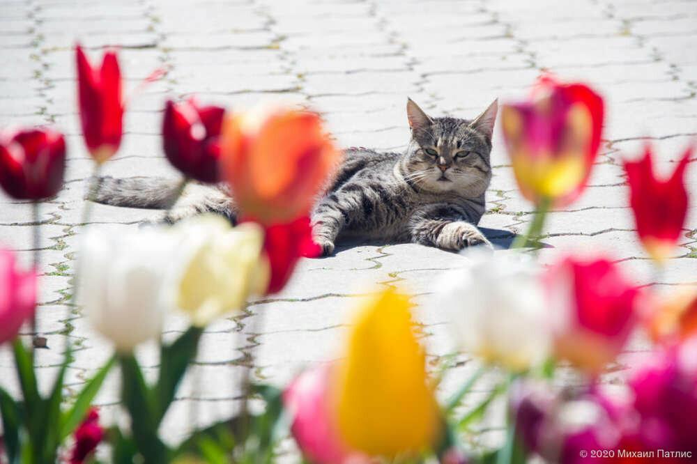 «Парад тюльпанов 2020» в Никитском саду подвел итоги, фото-6