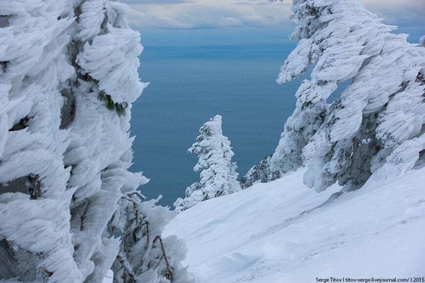 Ялтинская зимняя сказка- 2015 в фотографиях (фото) - фото 4