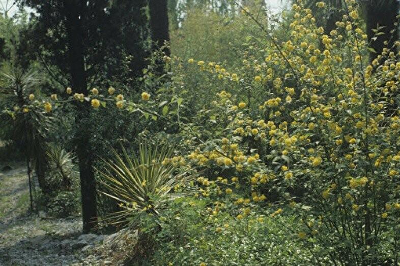 чеховский сад фото этому многие